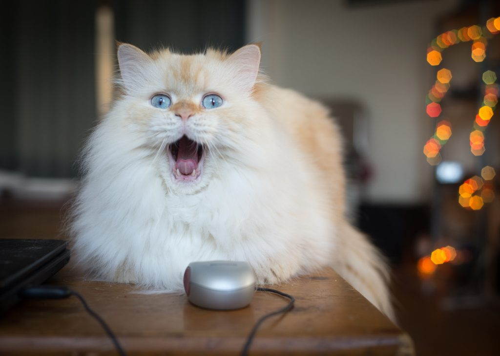 El gato se come al raton