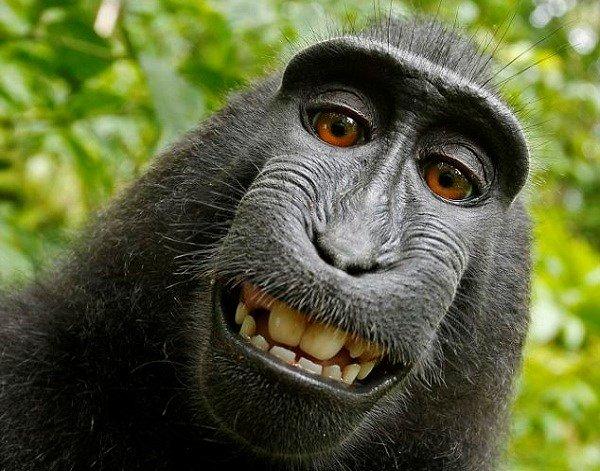 Selfie del macaco. Fotografía de Slater